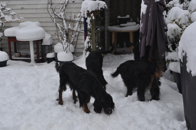winter19122010 (1)