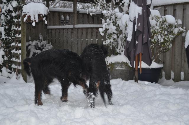 winter19122010 (7)