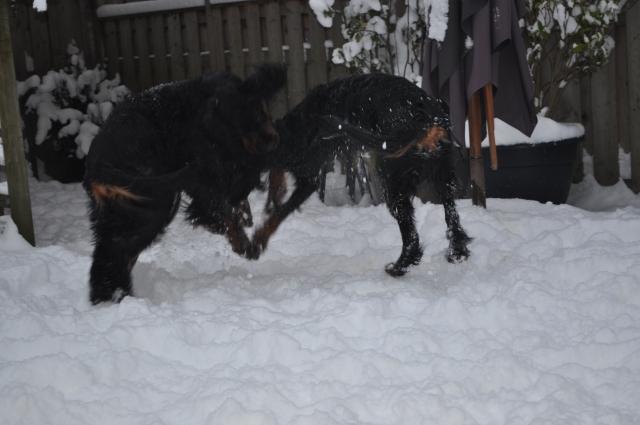 winter19122010 (10)