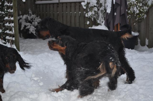 winter19122010 (14)