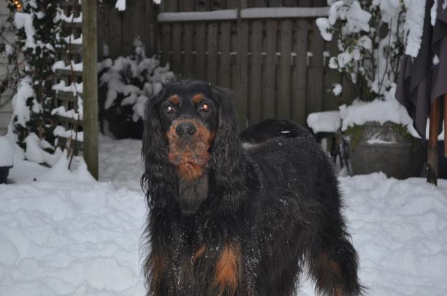 winter19122010 (15)