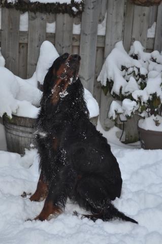 winter19122010 (26)