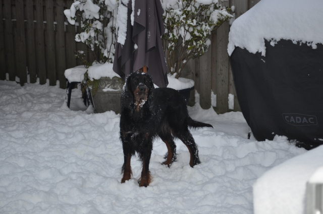 winter19122010 (29)